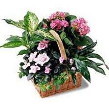 Pink Assortment Basket