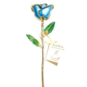 Single blue colored Gold Rose