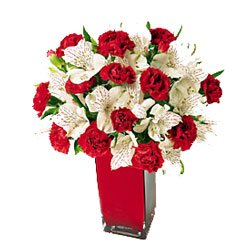 xmass_carnations_and_whites.jpg